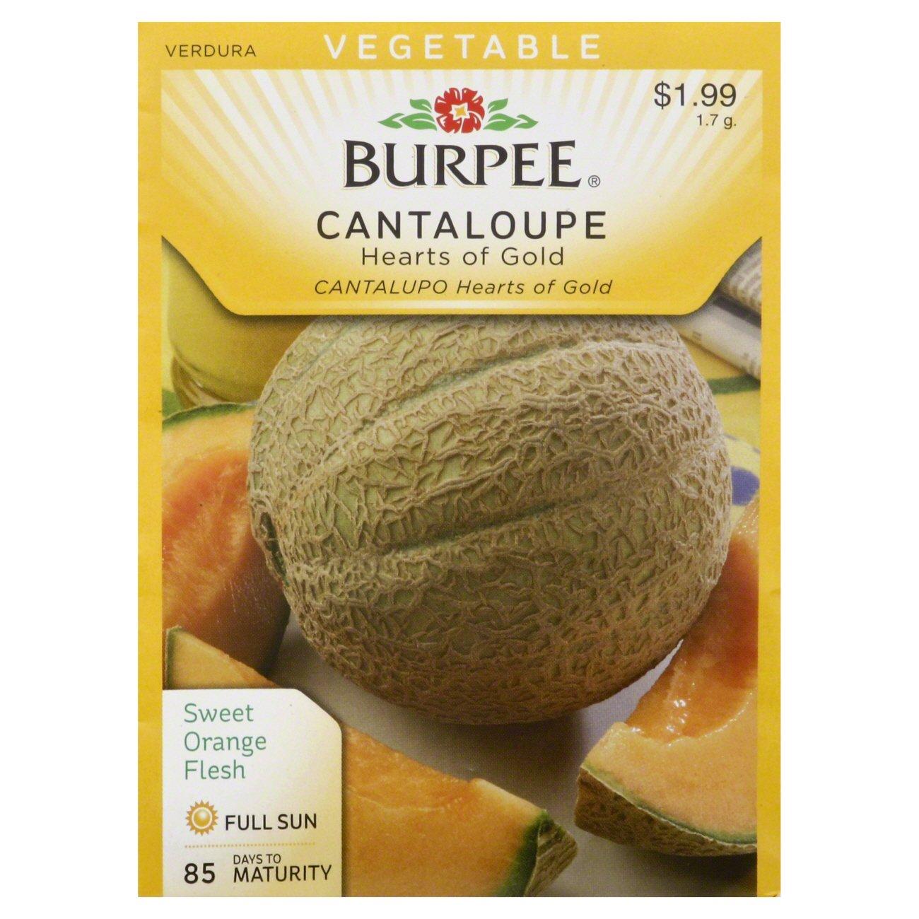 Burpee Cantaloupe Seeds Hearts Of Gold Shop Seeds At H E B Origin of the word cantaloupe. heb com