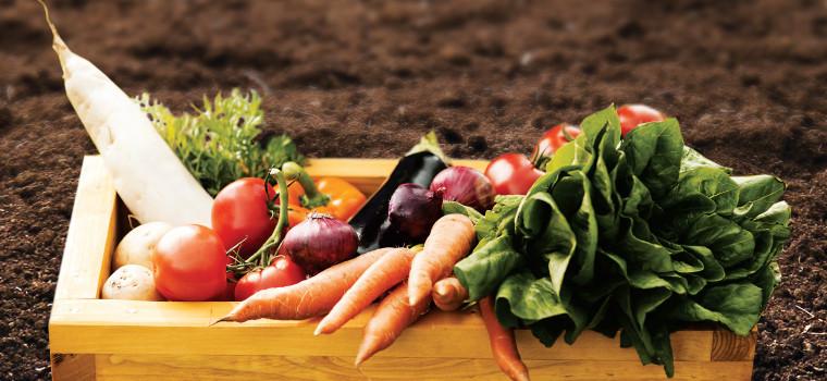 Gentil How To Start A Backyard Garden