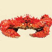 H-E-B Crab Species