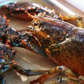 H-E-B Lobster Selection