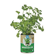 Back To The Roots Garden In A Can Organic Cilantro