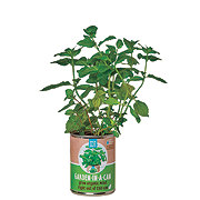 Back To The Roots Garden In A Can Organic Mint