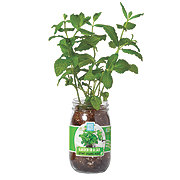 Back To The Roots Garden In A Jar Mint