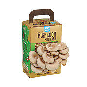 Back To The Roots Organic Mushroom Mini Farm