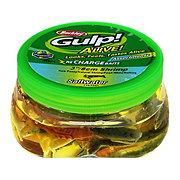 """Berkley Gulp! Alive! Recharge Assorted 3"""" Shrimp Baits"""