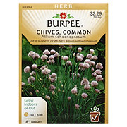Burpee Chive Seeds, Common