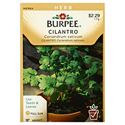 Burpee Cilantro Seeds, Coriandum Sativum