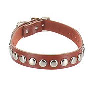 Coastal Pet Products 1 Inch X 23 Inch Leather Collar