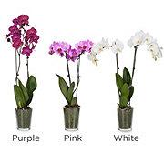 Floral Premium Orchids