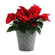 Floral Red Poinsettia, 6 in