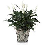 Floral Simplicity Planter