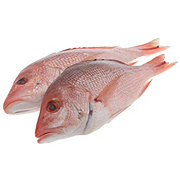 Fresh American Red Snapper Small, Wild Caught