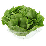 Fresh Butter Lettuce