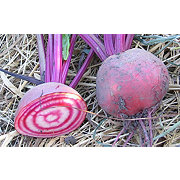 Fresh Candy Cane Beets