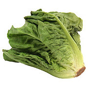 Fresh Escarole