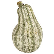 Fresh Green Striped Cushaw Pumpkin