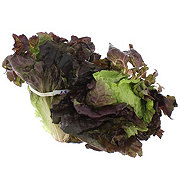 Fresh Organic Red Leaf Lettuce