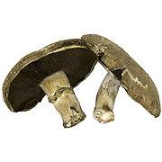 Fresh Portabella Mushroom