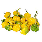 Fresh Scotch Bonnet Chile Peppers