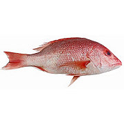 Fresh Whole American Red Snapper