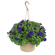 Growers Select Hanging Baskets 10 Inch