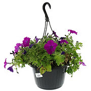 H-E-B Hanging Basket Annual 10 Inch, Assorted
