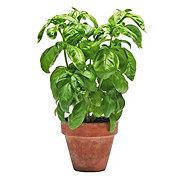 H-E-B Organic Herbs