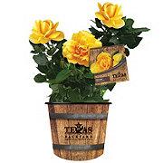 H-E-B Texas Backyard Rose