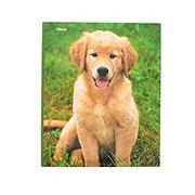 Mead Purrs & Grrrs Assorted 2 Pocket Folders